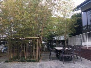 南側の庭の一角には古都京都を思わせる竹林が広がっています。